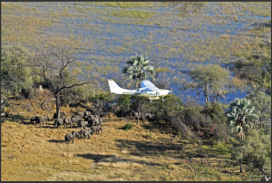 Observers in a Cessna add up the numbers of elephants in transect flights over northern Botswana's Okavango Delta as part of an 18-country survey called the Great Elephant Census – Photograph by Kelly Landen