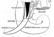 tuskmorphology